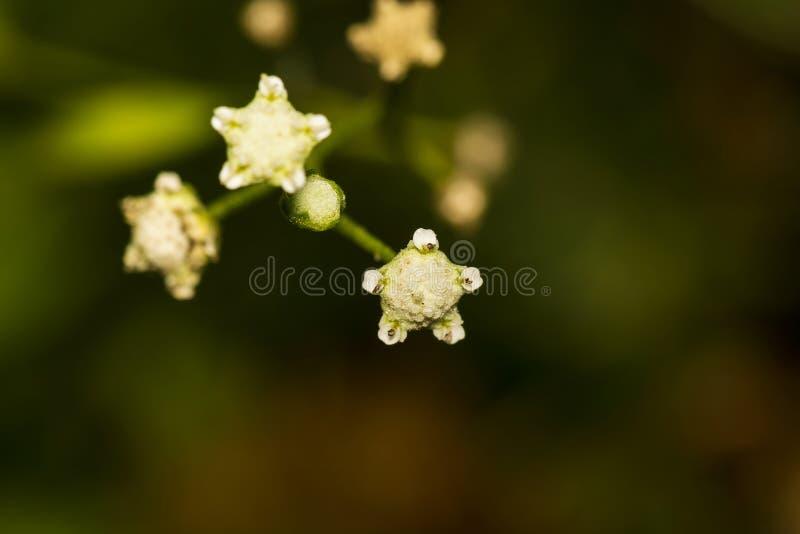 Beau bokeh formé shar minuscule de fond d'abrégé sur fleur photo stock