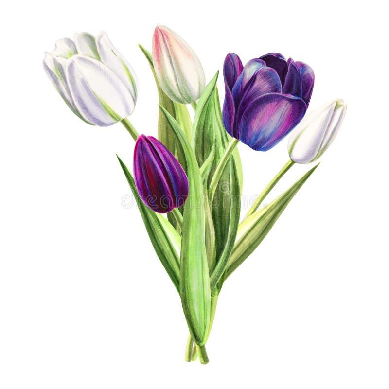 Beau bouquet blanc et noir de tulipe Dessin de marqueur Peinture d'aquarelle illustration libre de droits