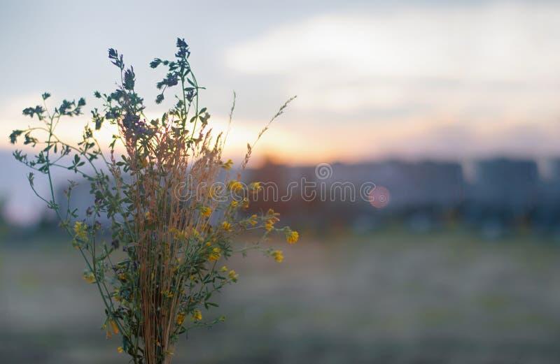 Beau bouquet dans le domaine au coucher du soleil photos libres de droits