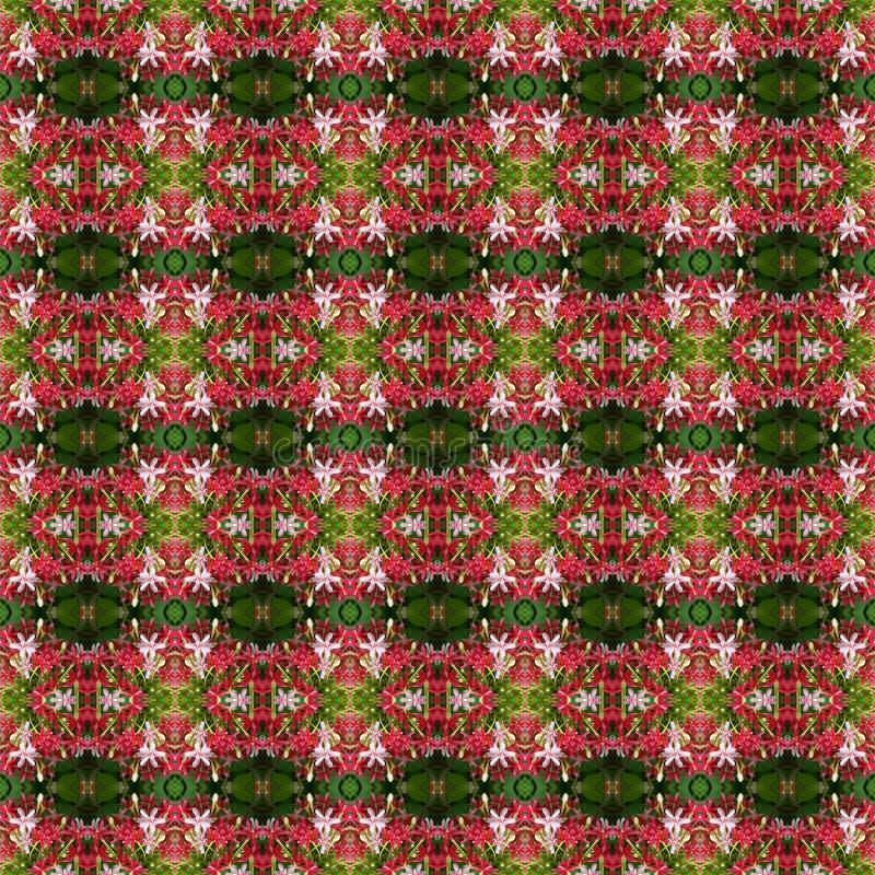 Beau bouquet de la fleur indica de Quisqualis sans couture images stock