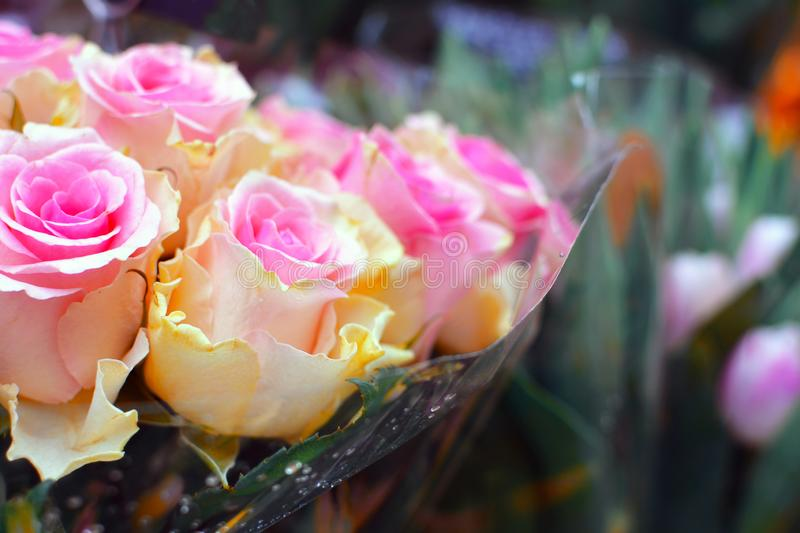 Beau bouquet fait de roses jaunes crèmes avec les astuces roses avec les fleurs troubles à l'arrière-plan photo libre de droits