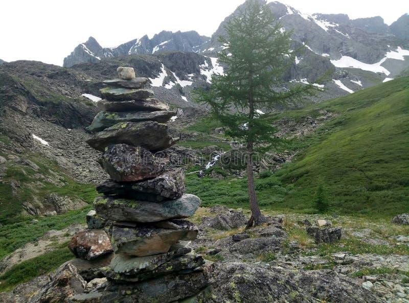 Beau cèdre à l'arrière-plan des montagnes neigeuses image libre de droits