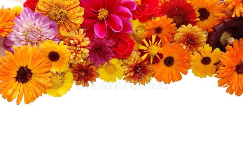 Beau cadre des fleurs fraîches photographie stock