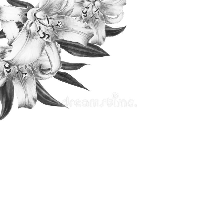 Belle Pivoine Blanche Et Cadre Blanc De Tulipes Bouquet Des