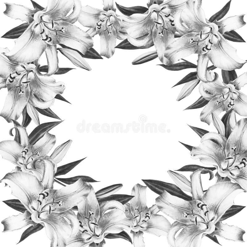 Beau Cadre Noir Et Blanc De Frontière De Lis Bouquet Des