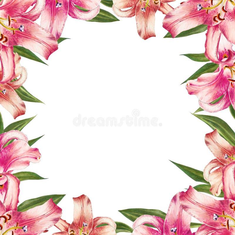 Beau cadre rose de frontière de lis Bouquet des fleurs Impression florale Dessin de marqueur illustration stock