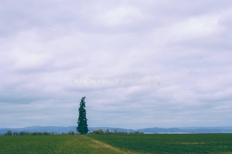 Beau champ avec un pin simple et un ciel nuageux stupéfiant à l'arrière-plan image libre de droits