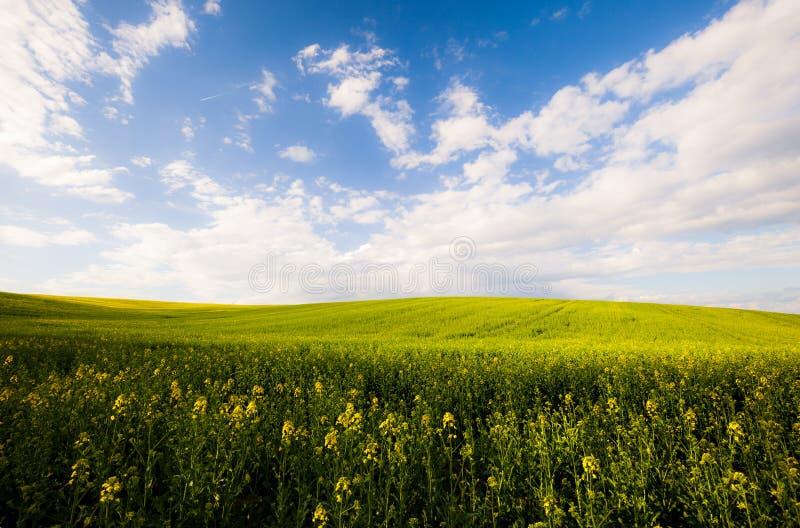 Beau champ d'été au jour ensoleillé photographie stock libre de droits