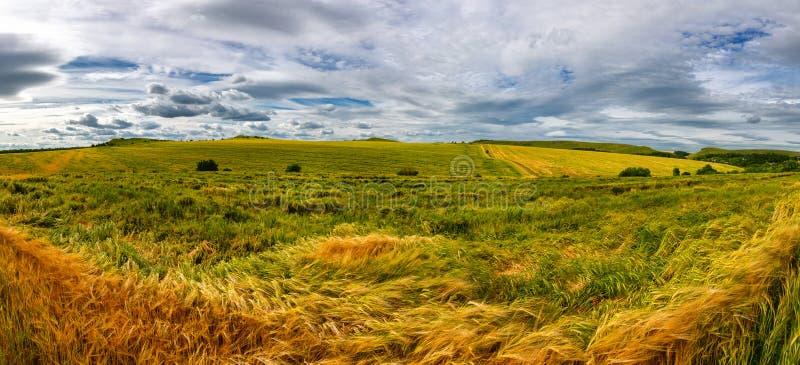 Beau champ de blé par temps venteux Champ contre le ciel Horizontal ukrainien l'ukraine photos libres de droits