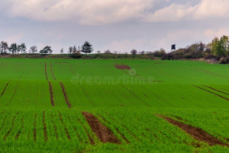 Beau champ vert avec tour de guet en bois sur l'horizon photographie stock
