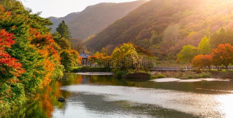 Beau changement de couleur de feuilles d'automne et leur réflexion dans l'étang photos libres de droits