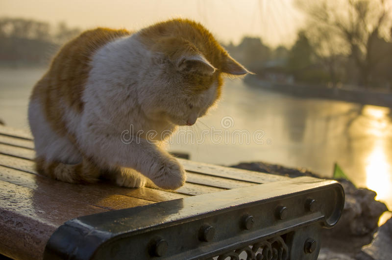 Beau chat photographie stock