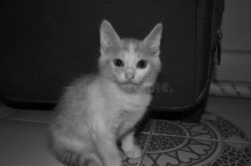 Beau chat photo stock
