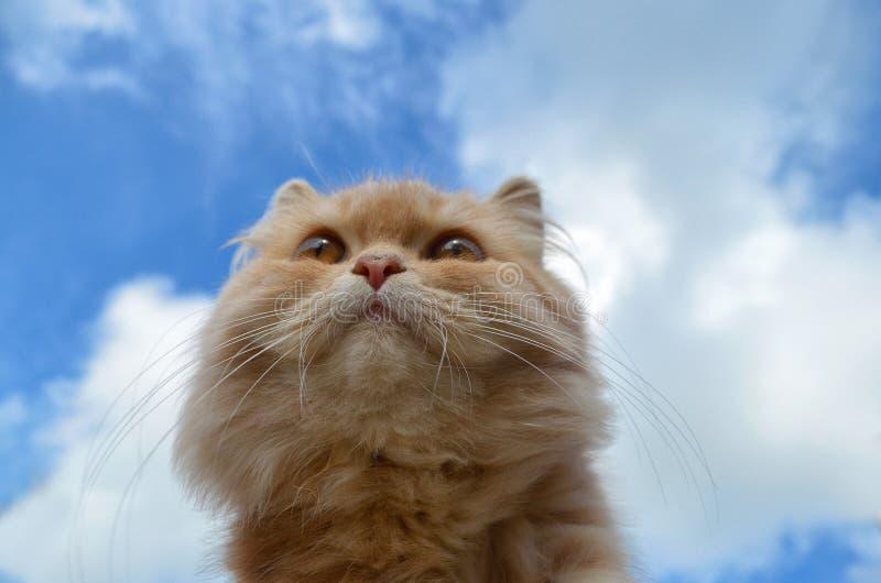 Beau chat dans un ciel bleu photos stock