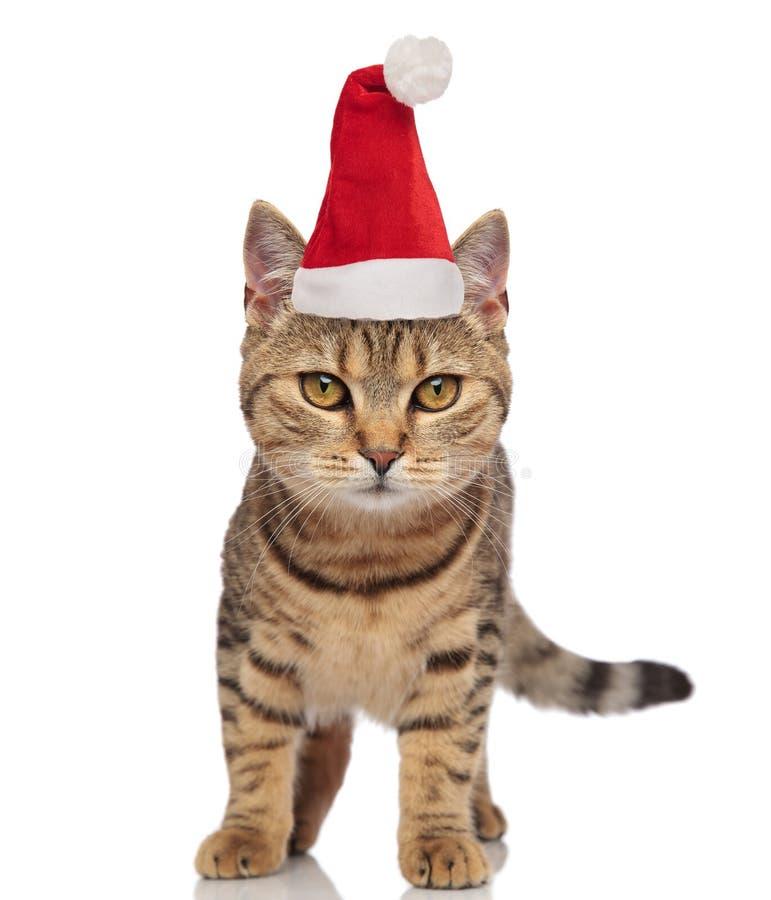 Beau chat de Santa avec la position de rayures image libre de droits