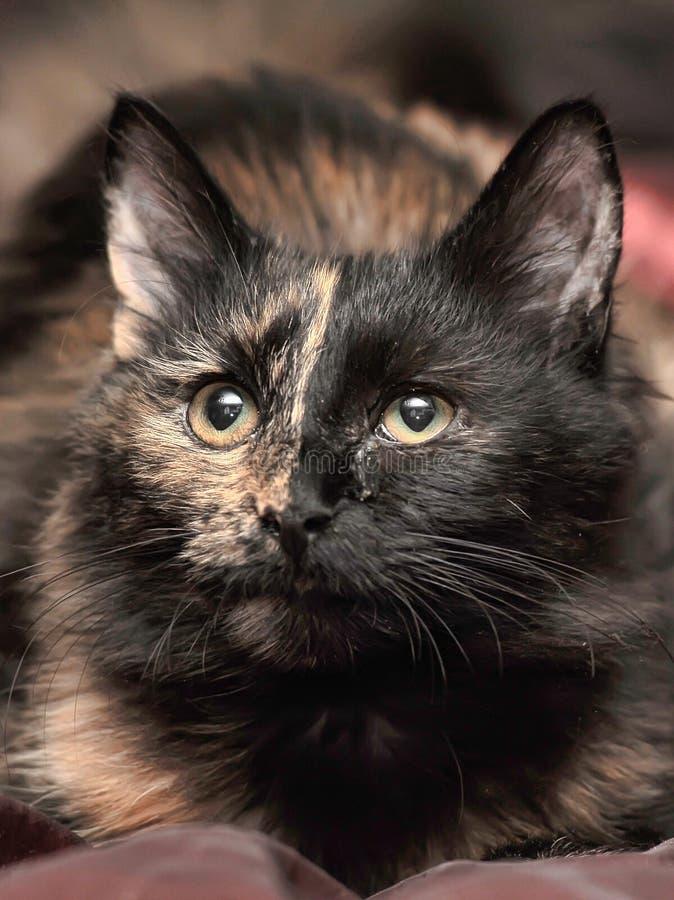 Beau chat de tortie images stock