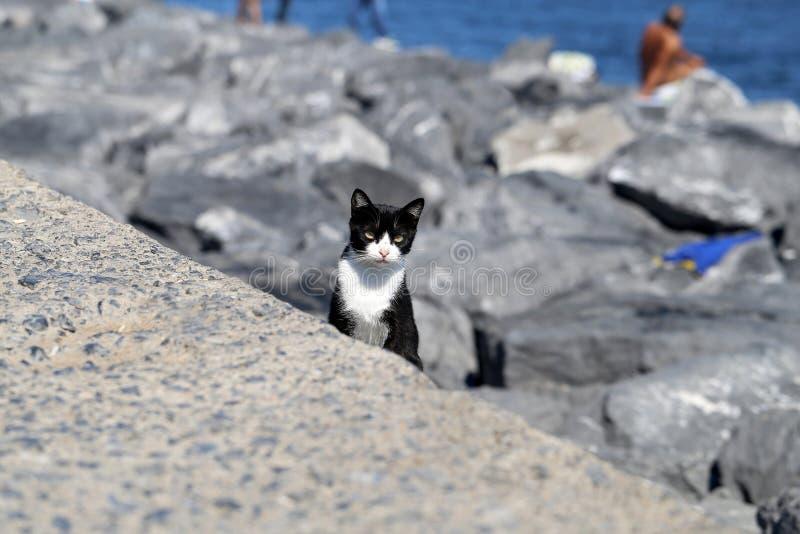 Beau chat noir et blanc photographie stock
