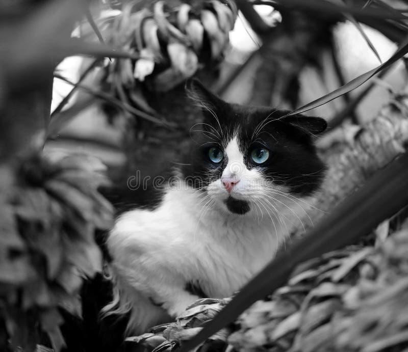Beau chat noir et blanc images stock