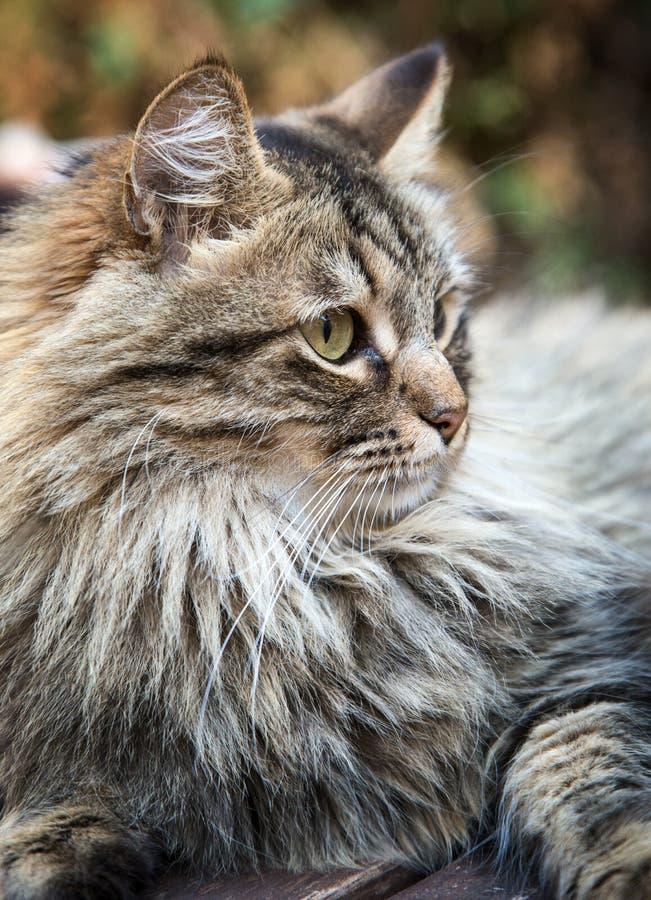 Beau chat sur le vieux bois photographie stock libre de droits