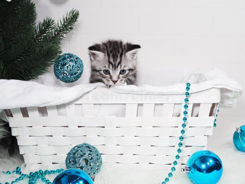 Beau chaton dans un panier sous l'arbre de Noël Chaton de nouvelle année image stock