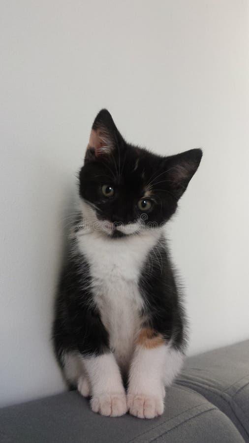 Beau chaton mignon photographie stock