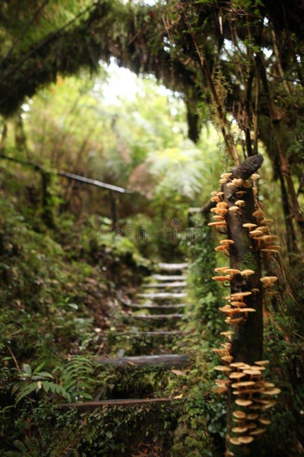 Beau chemin avec des champignons en parc national de Pumalin, Carretera austral, Chili, Patagonia image libre de droits