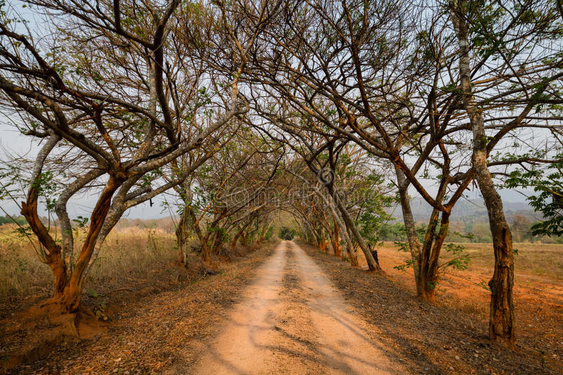 Beau chemin de terre avec le tunnel des arbres et du point de disparaition images libres de droits