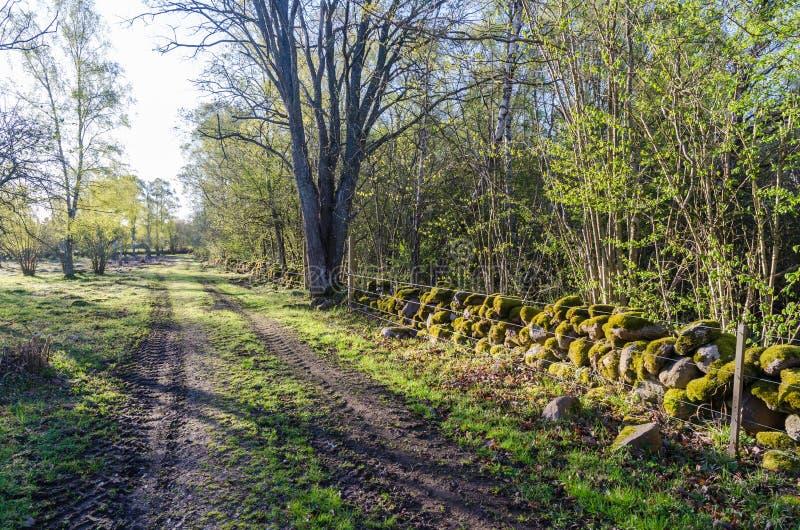 Beau chemin de terre rétro-éclairé au soleil de matin par printemps photos stock