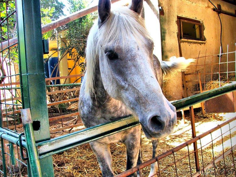 Beau cheval photo stock
