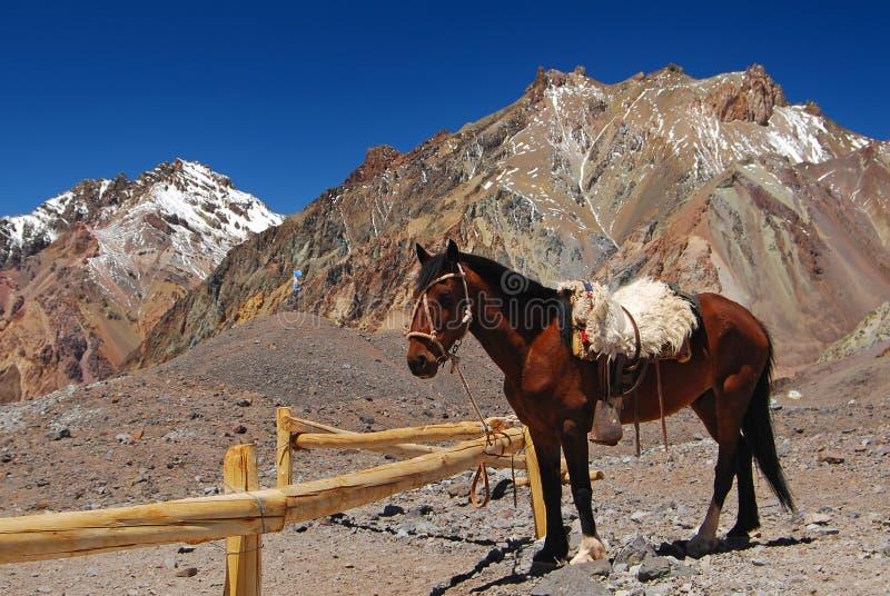 Beau cheval en montagnes neigeuses photographie stock libre de droits