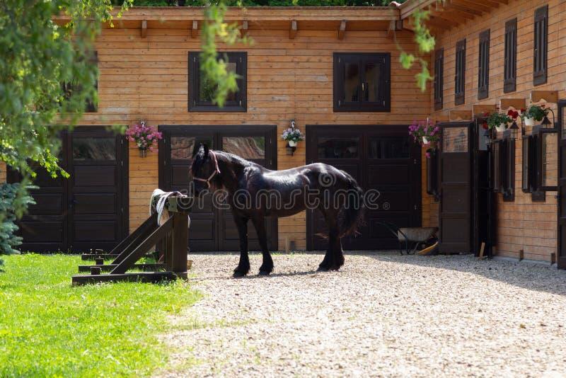 Beau cheval frison en dehors des écuries photo stock