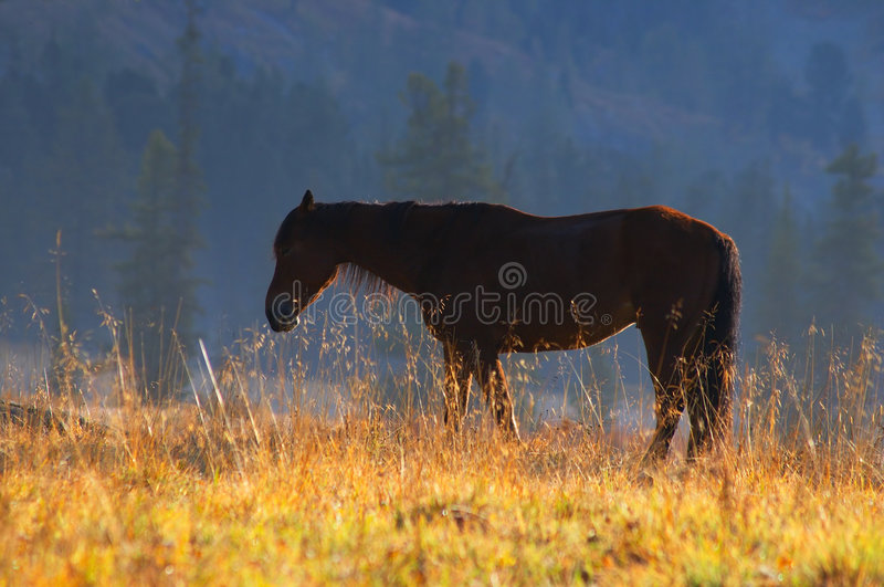 Beau cheval rouge. image stock