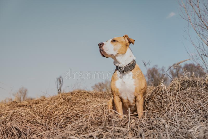 Beau chien dans le domaine, tir de héros images libres de droits