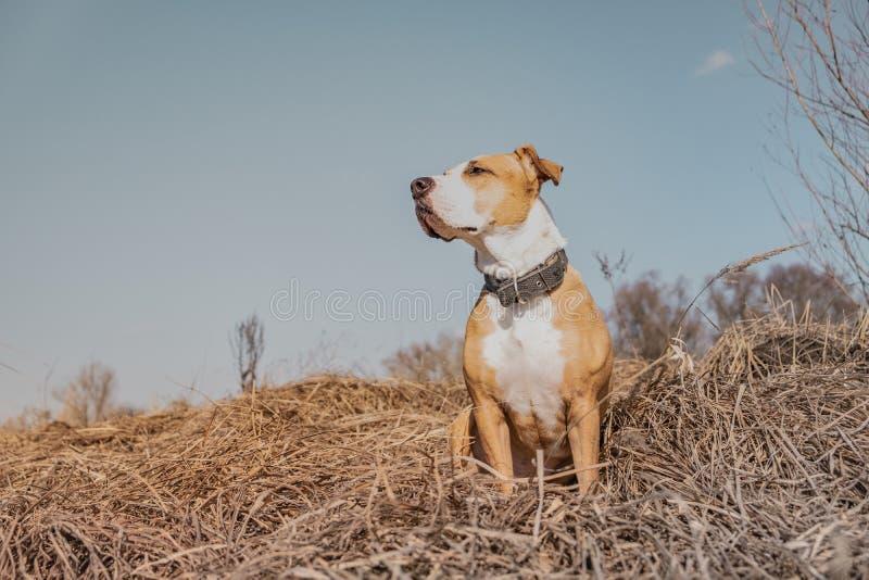 Beau chien dans le domaine, tir de héros photo stock