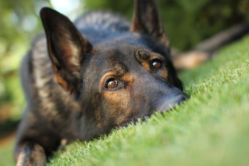 Beau chien de jardin image libre de droits