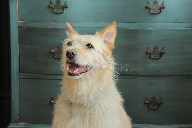 Beau chien devant la raboteuse photo libre de droits
