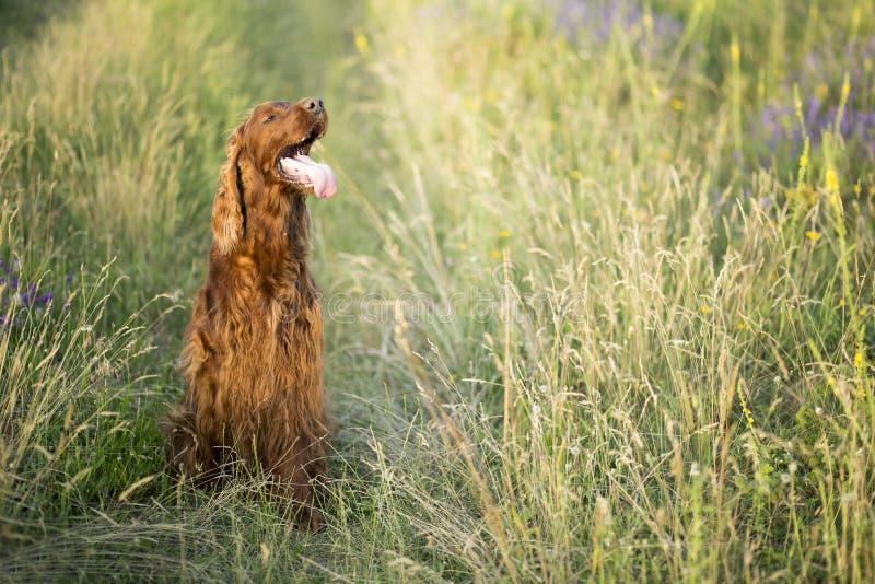 Beau chien en été photographie stock libre de droits
