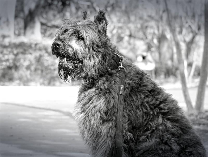 Beau chien en parc images stock
