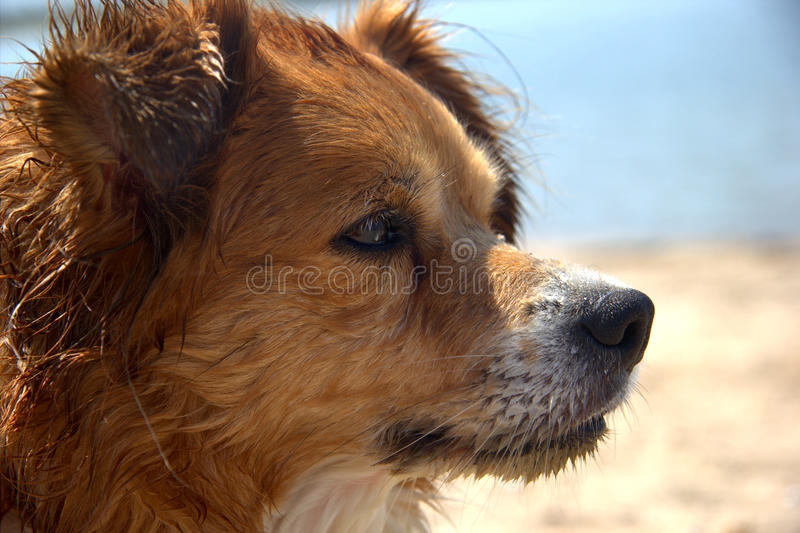 Beau chien humide photo stock