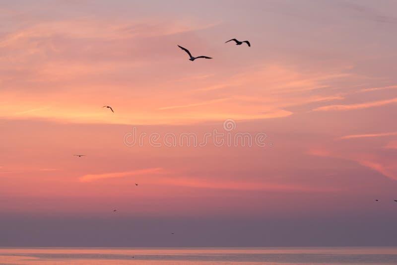 Beau ciel de lever de soleil au-dessus de la mer avec des silhouettes des oiseaux de vol, Vama Veche image libre de droits
