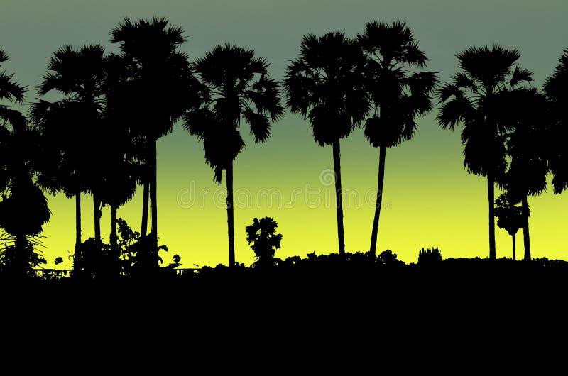 Beau clair de lune et palmiers à sucre noirs le soir illustration stock
