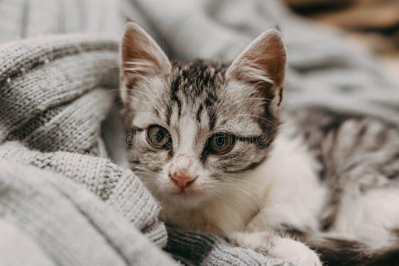 Beau closeup mignon chat, reposant de façon confortable et chaleureuse Humeur hivernale représentée par un doux félin domestique  image libre de droits