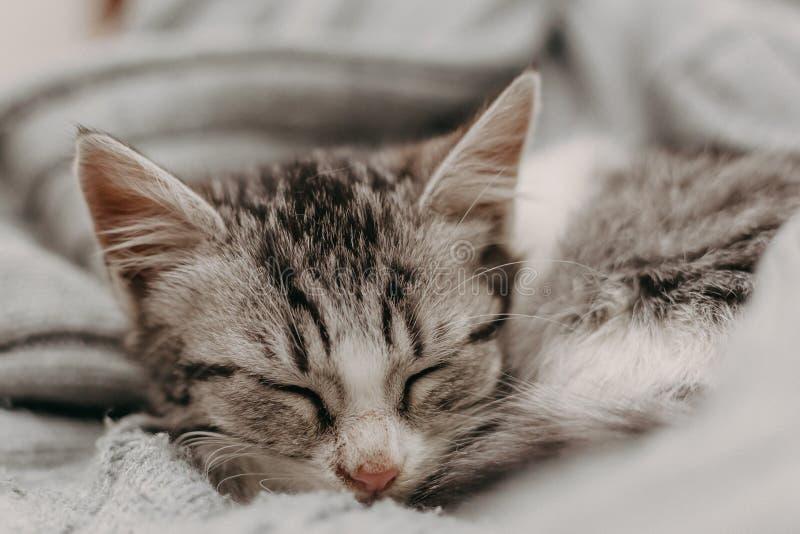 Beau closeup mignon chat, reposant de façon confortable et chaleureuse Humeur hivernale représentée par un doux félin domestique  image stock