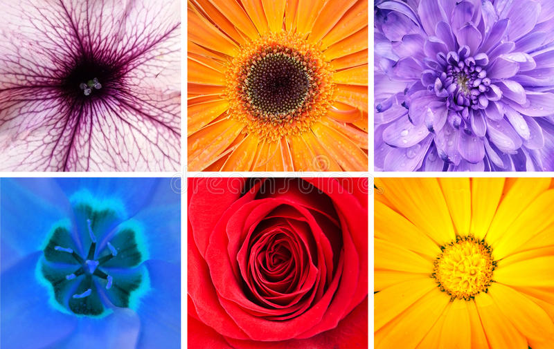 Beau collage de fleurs - macro tirs photo libre de droits