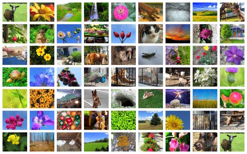 Beau collage des photos des animaux, fleurs, paysages photo stock
