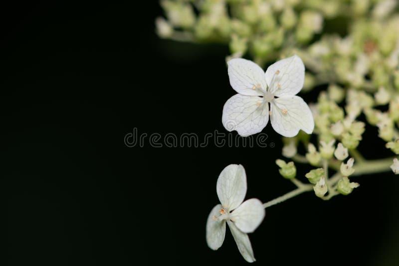 Beau, coloré plan rapproché d'une fleur photo stock