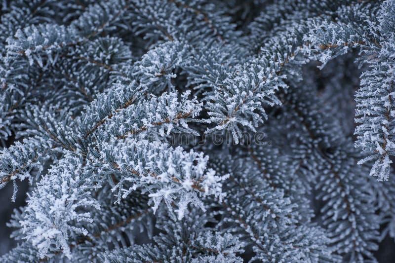 Beau contexte des branches d'arbre couvertes de neige photos stock