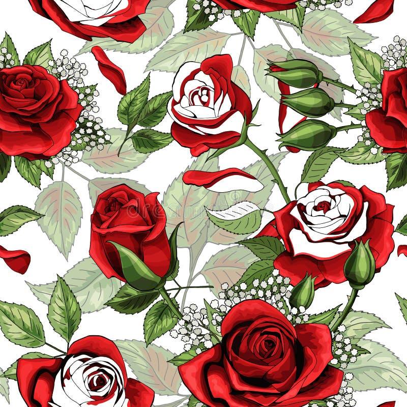 Beau contour blanc et fond sans couture colered de modèle de roses rouges illustration stock