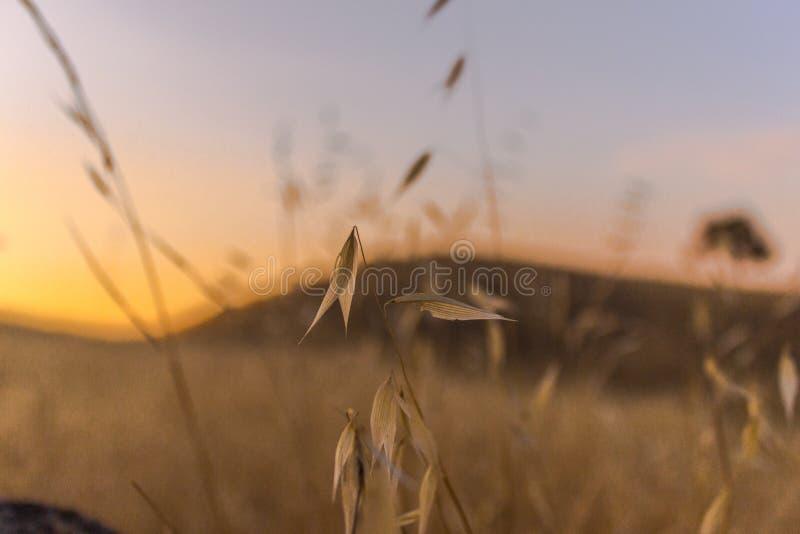 Beau coucher du soleil à la sierra vue photos stock