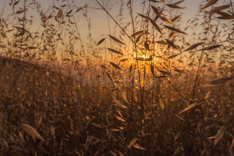 Beau coucher du soleil à la sierra vue photo stock